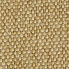 chenillas-coralia29
